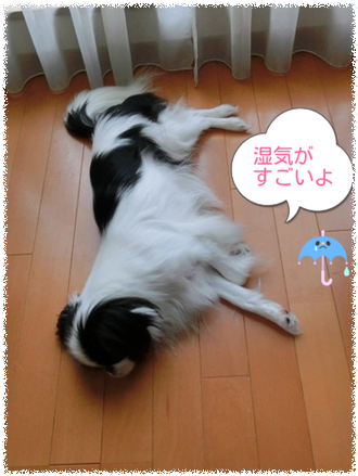 20130729b.png