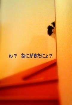 2013-02-04-23-18-20_photo.jpg