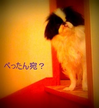 2013-02-04-23-18-41_photo.jpg