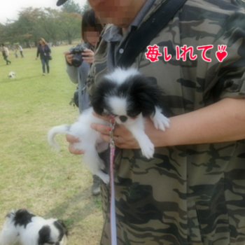 20131103(5.png